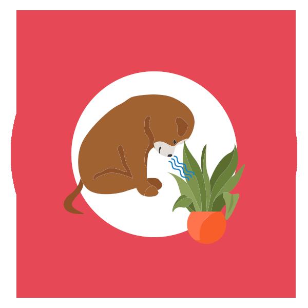 discriminazione-olfattiva-cane