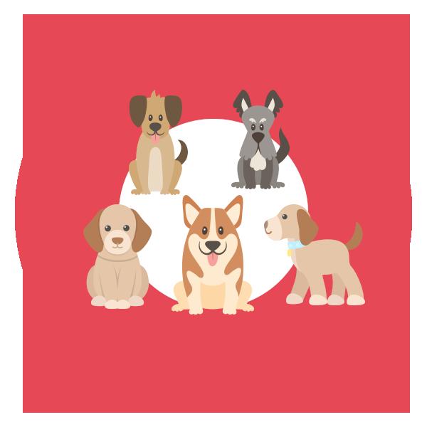 puppy-class-icona