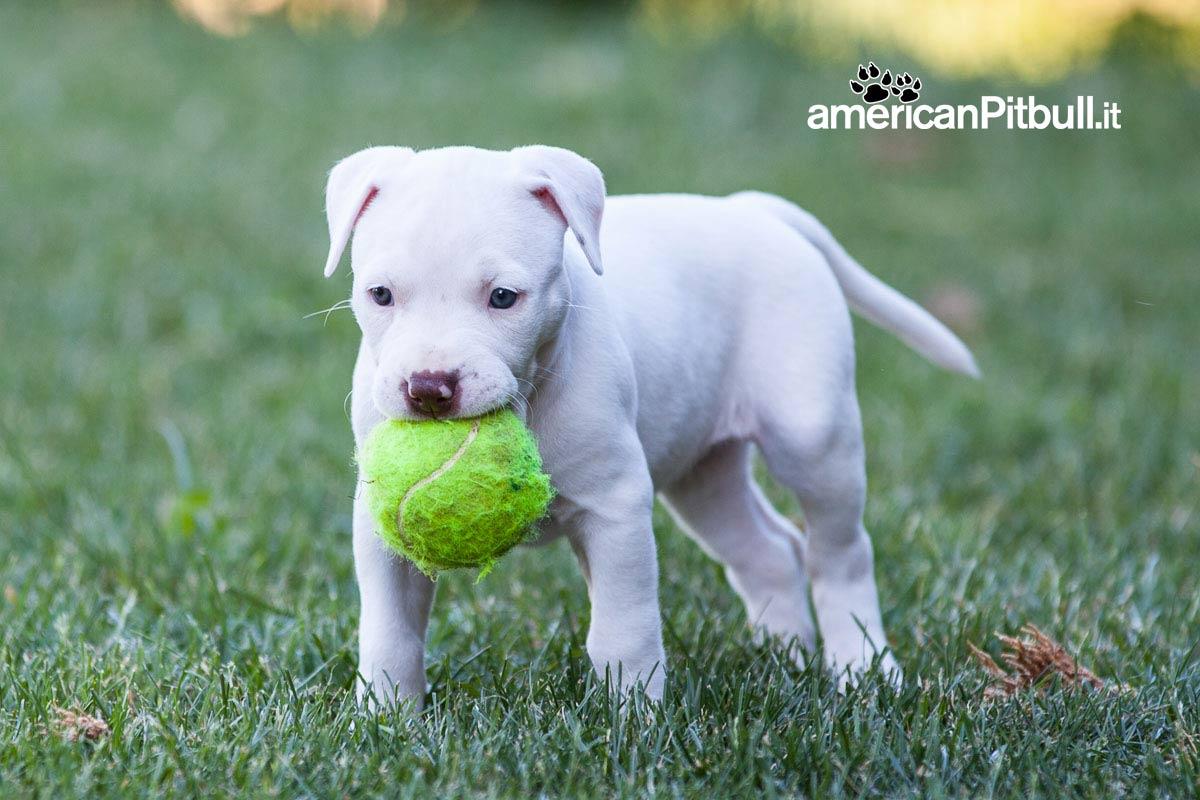 cucciolo cane con pallina
