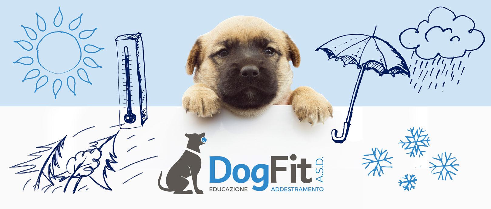 dog-fit-contatti